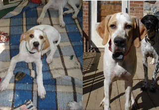 Guster at 10 weeks and five months of age.