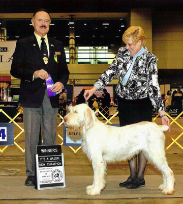 Larch, Spinoni, Spinone champion